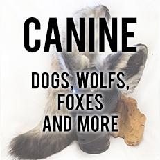 Canine Sets