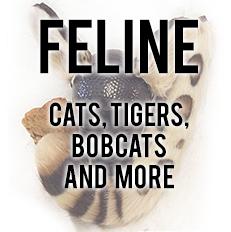 Feline Sets