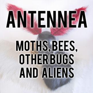 Antennea